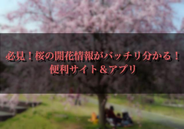 必見!桜の開花情報がバッチリ分かる!便利サイト&アプリ